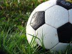 ball grass